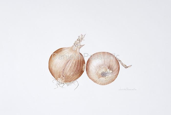Cipolla dorata di Voghera.jpg