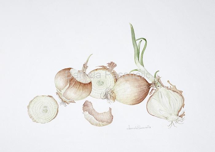Cipolla paglierina di Sermide.jpg