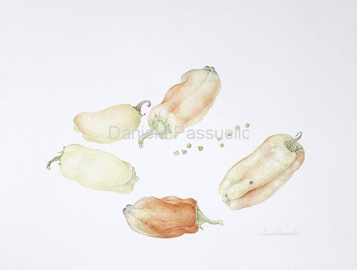 Peperone bianco.jpg