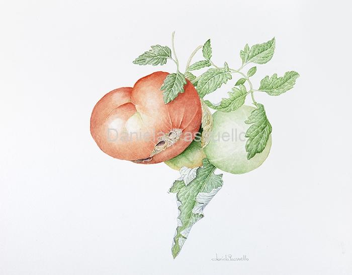Pomodoro gigante di Remondò.jpg