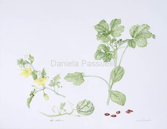 anguria-da-mostarda.jpg